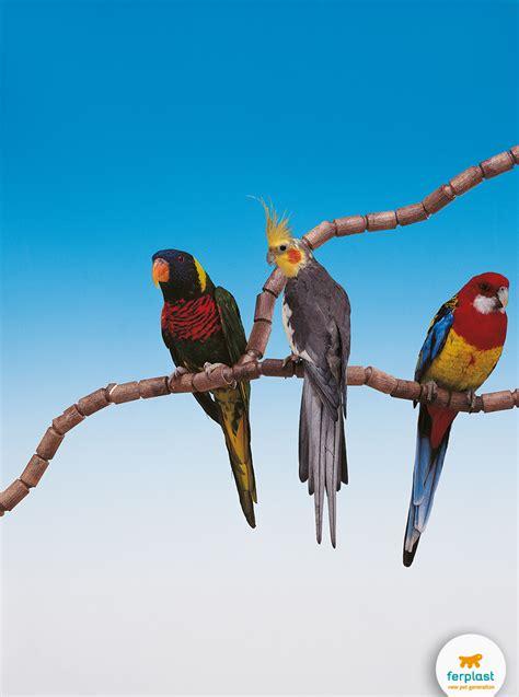 pappagallo in gabbia 5 consigli per non far annoiare il pappagallo ferplast