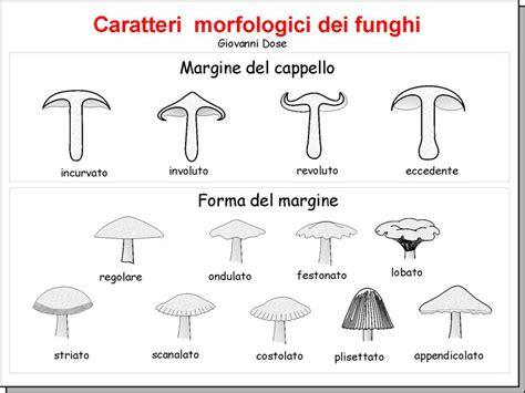 tavola dei caratteri tavole dei caratteri morfologici dei funghi appunti di