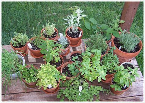 Quality Soil Potted Herb Garden Ideas 747 Hostelgarden Net Potted Herb Garden Ideas