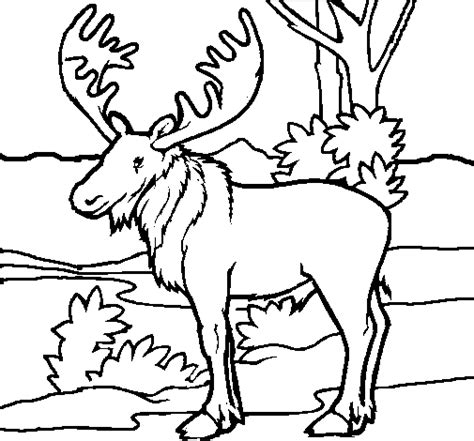 coloring book pages moose moose coloring page coloringcrew