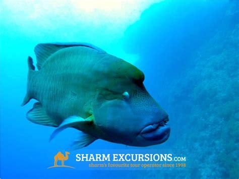 dive in sharm diving in sharm el sheikh