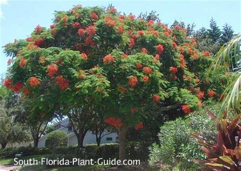 large flowering trees