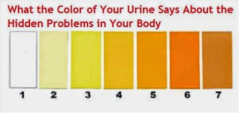 what color should your urine be what color should your urine be pictures to pin on