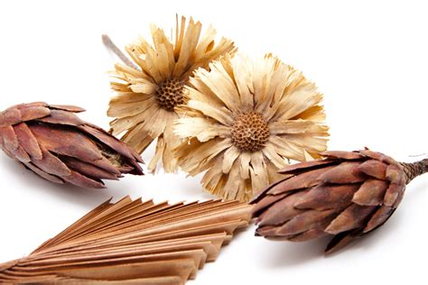 Dried Flowers by Dried Flower Arrangements For Fall