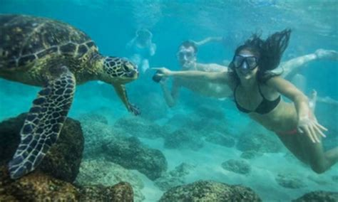 cape coral boat rental groupon hawaii turtle tours up to 61 off honolulu hi groupon