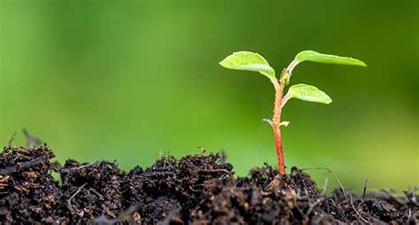 plantadores de igrejas avalia 231 227 o para plantadores de igrejas me