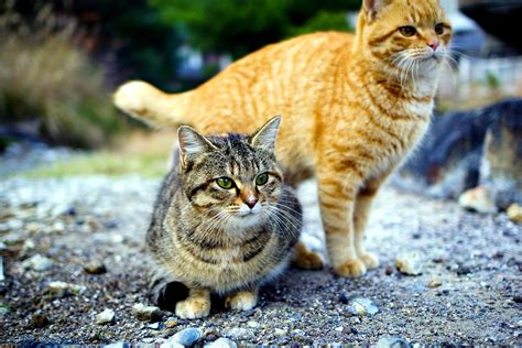 straight talk about curves cornered cat straight talk about curves cornered cat the petplus wall