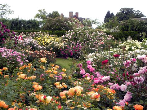 moments of delight anne reeves visiting england rose