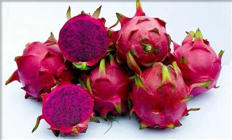 dragon fruit pitaya red flesh variety  sunnyside