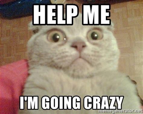 Help Me Meme - help me i m going crazy geezus cat meme generator