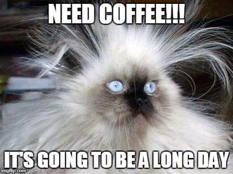 Need Coffee Meme - crazy hair cat imgflip