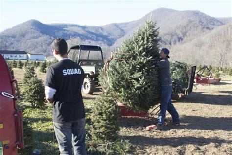 mehaffey tree farm nc christmas trees blue ridge
