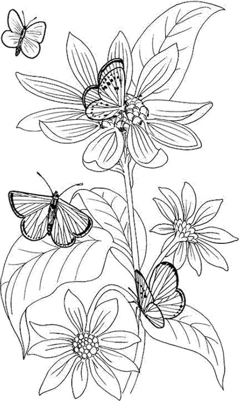 coloring books for adults to print free printable coloring pages of fairies for adults az