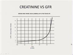 creatinine quizlet renal 01 02 flashcards quizlet