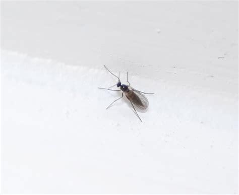 Kleine Schwarze Fliegen In Der Küche