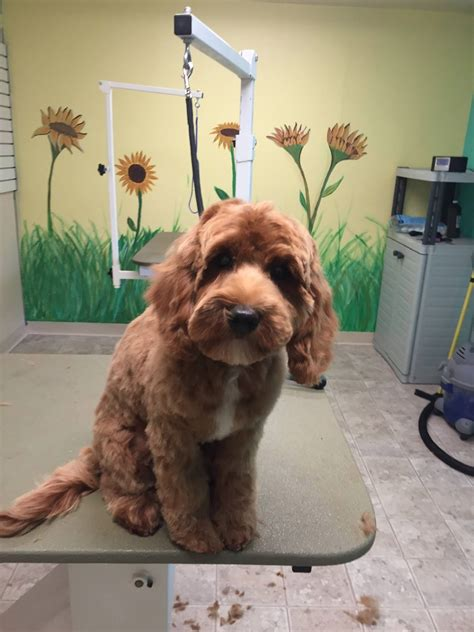 creature comforts loveland creature comforts pet retreat pet boarding in loveland