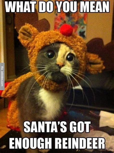 Funny Christmas Memes - cute christmas cat meme picture