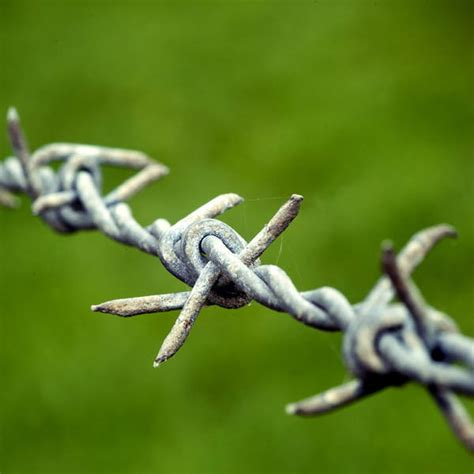 celebrating the invention of barbed wire sciencelens