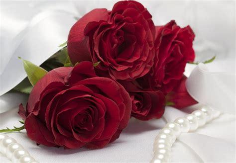free wallpaper red rose all 4u hd wallpaper free download beautiful red rose