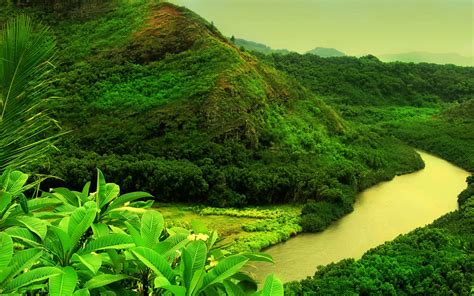 background nature wallpapers green nature wallpapers