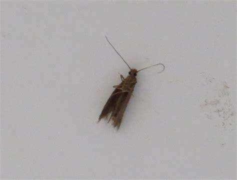 kleine obstfliegen in der wohnung innenarchitektur kleines kleine fliegen kuche kfer kche