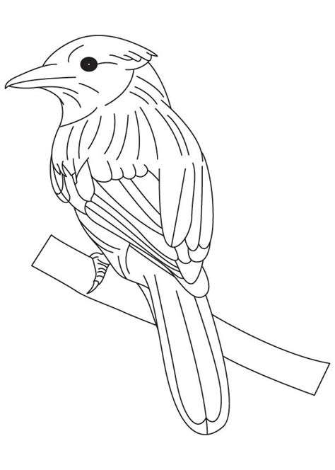 free coloring pages on bluebirds free coloring pages of mountain bluebird