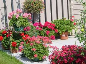 potted plants for patios patio ideas pinterest