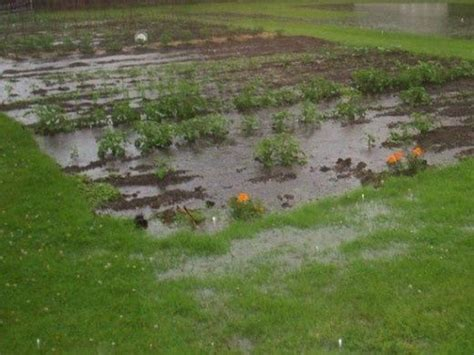 backyard soil how to improve clay soil and poor garden drainage