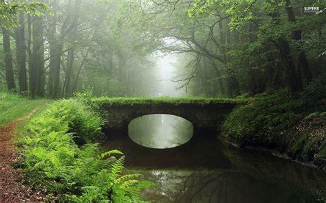 overgrown bridge foggy wood wallpapers overgrown bridge