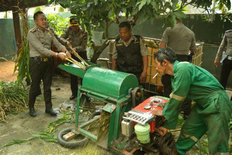 Mesin Fermentasi Pakan Ternak mesin pencacah ubah limbah pertanian menjadi pakan ternak