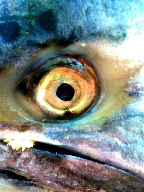 fish eye fish eye eye eye