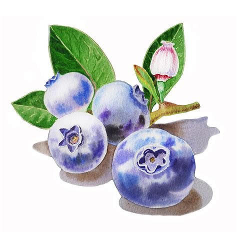 what color are blueberries blueberries painting by irina sztukowski