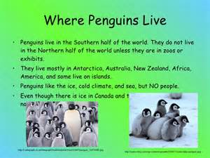Where Does Live Penguins