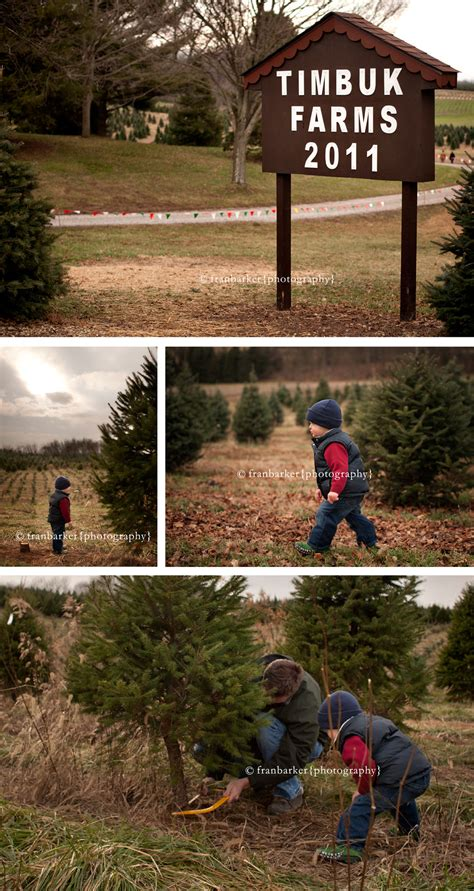 ideas about christmas tree farms columbus ohio cheap