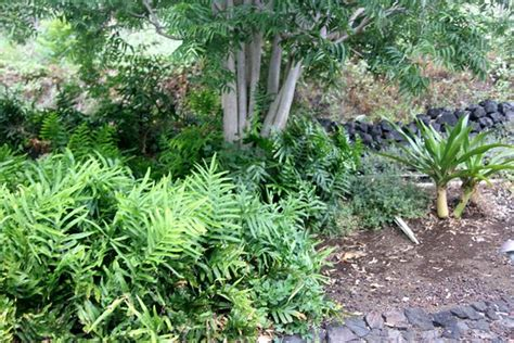 Sadie Seymour Botanical Gardens Kailua Kona Top Tips Kona Botanical Gardens