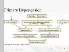 pathophysiology of hypertension flowchart cardiovascular pathophysiology flashcards quizlet