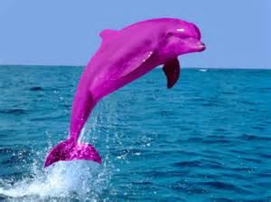 avenger blog dolphin pictures