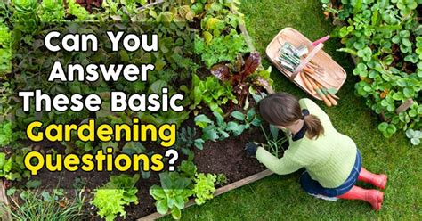 Gardening Quiz Questions Can You Answer These Basic Gardening Questions Quizpug