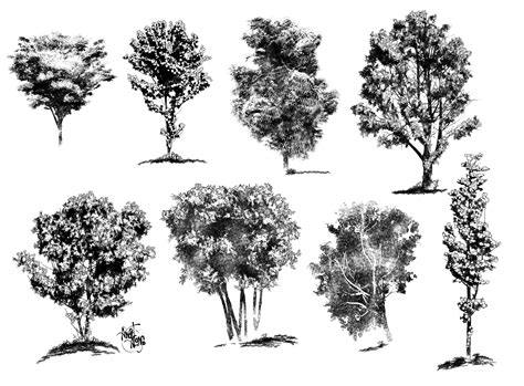 landscape architecture tree drawings with architectural