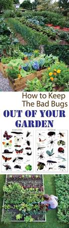 1000 images about diy gardening ideas on pinterest garden ideas garden pests and planters