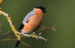quizz les oiseaux de nos jardins quiz jardins oiseaux