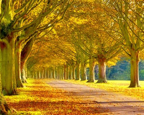 sunny autumn afternoon hd wallpaper hd latest wallpapers