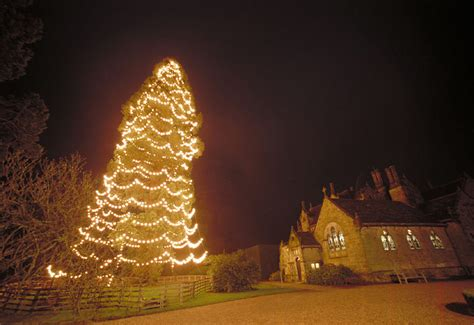 top ten christmas trees in the world photo 8