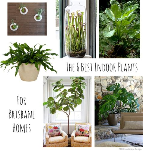 the best indoor plants the 6 best indoor plants for brisbane homes seed