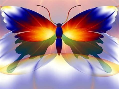 colorful butterfly wallpaper free download butterfly high definition wallpapers free download