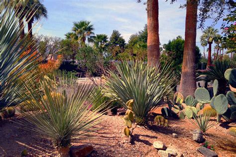 phoenix landscape design custom landscaping envirogreen