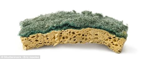 Kitchen Sponge Bacteria by Kitchen Sponges Contain The Most Bacteria In A Household