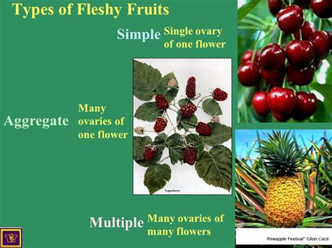 fruit exles four types of fruit simple aggregate and