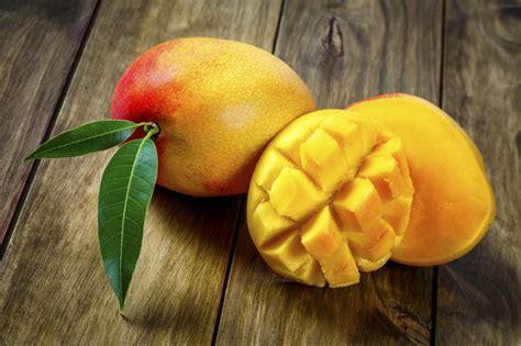 pianta di mango in vaso piante di mango albero di mango fotografia stock immagine