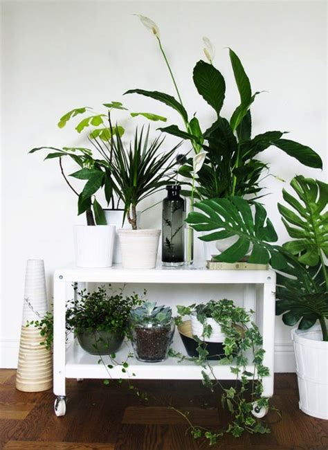 Home Decor With Plants with 25 Ways To Decorate With Plants Brit Co